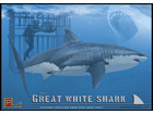 [1/18] Great white Shark & Diver